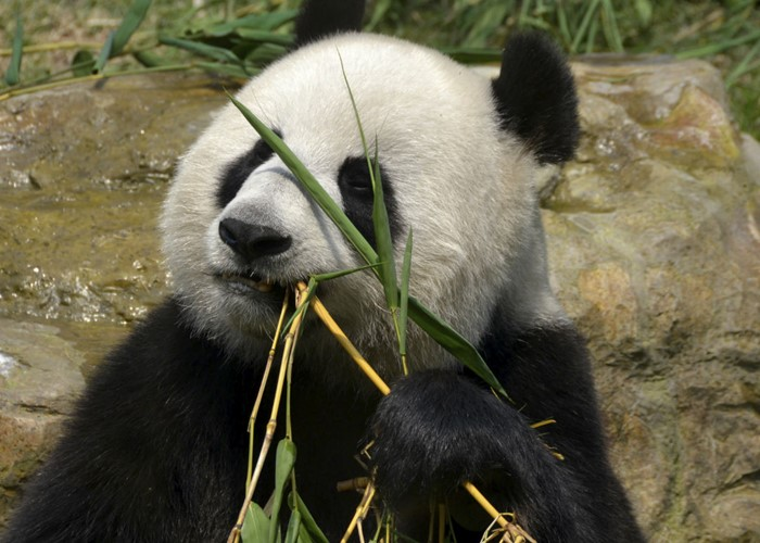 Don't get caught out by the bamboo investment <b>scam</b>
